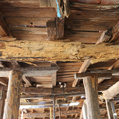 rotting timber that has had a woodworm infestation